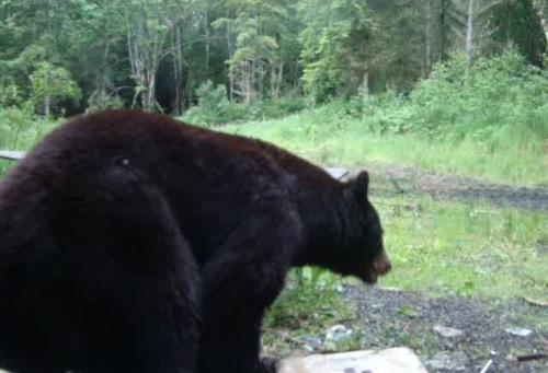 My House Living With Bears